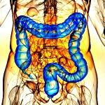 Толстый кишечник: анатомия для чайников