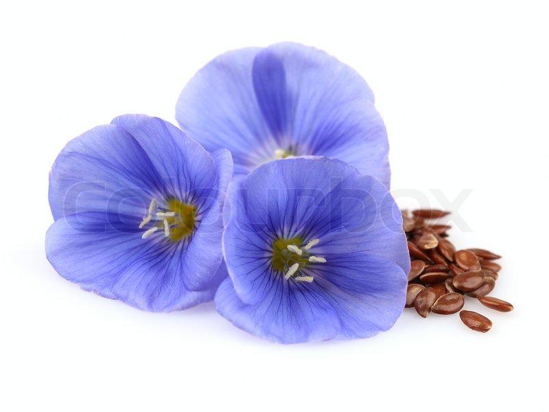 Семена льна для очищения кишечника