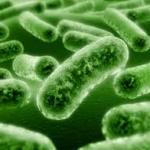 Пробиотики для кишечника: эффективность и безопасность?