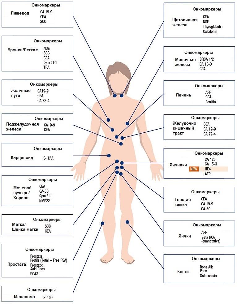 анализ крови на холестерин в иркутске недорого