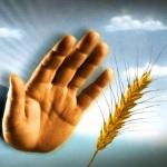 Разница между целиакией, непереносимостью глютена без целиакии и аллергией на пшеницу: таблица